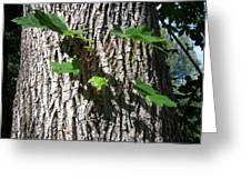 Maple Branch Greeting Card