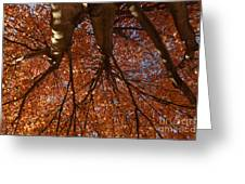 Maple Dreaming Greeting Card