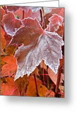 Maple Frost  Greeting Card