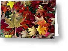Maple Leaf Colors Greeting Card