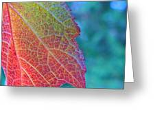 Maple Leaf In Autumn Greeting Card
