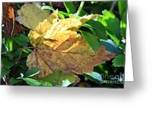Maple Leaf Greeting Card by Kathy DesJardins