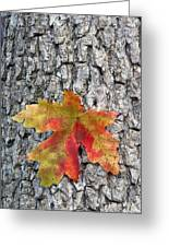 Maple Leaf On A Maple Tree Greeting Card