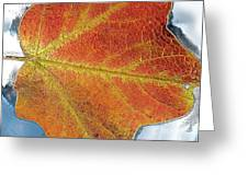 Maple Leaf On Water Greeting Card