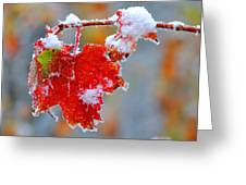Maple Leaf With Snow Greeting Card