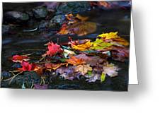 Maple Leaves-0001 Greeting Card