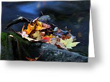 Maple Leaves-0004 Greeting Card