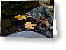 Maple Leaves-0006 Greeting Card