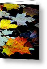 Maple Leaves-0011 Greeting Card