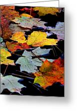Maple Leaves-0012 Greeting Card