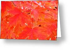 Maple Leaves 3 Pd  Greeting Card