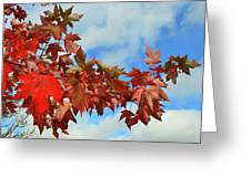 Maple Leaves Against The Sky  Greeting Card