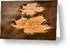 Maple Leaves And Drops Pnt Greeting Card