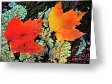 Maple Leaves On Fallen Log Greeting Card