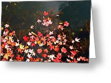 Maple Leaves On The Water  Greeting Card