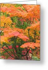 Maple Magic Greeting Card