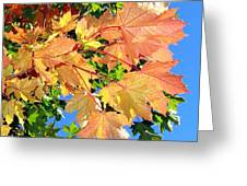 Maple Mania 1 Greeting Card