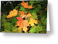 Maple Mania 10 Greeting Card