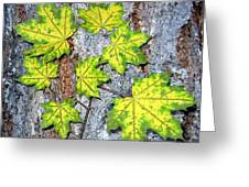 Maple Mania 12 Greeting Card