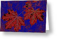 Maple Mania 15 Greeting Card
