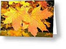 Maple Mania 2 Greeting Card