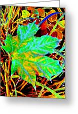 Maple Mania 21 Greeting Card by Will Borden