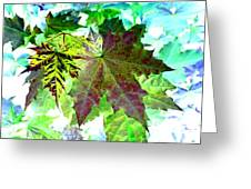 Maple Mania 24 Greeting Card