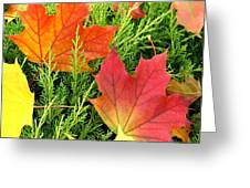 Maple Mania 5 Greeting Card
