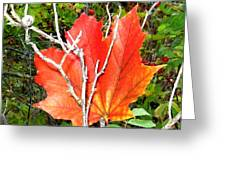 Maple Mania 6 Greeting Card