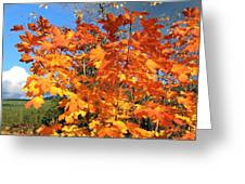 Maple Mania 8 Greeting Card