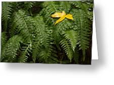 Maple On Fern Greeting Card