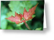 Maple Red And Green Greeting Card