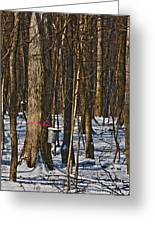 Maple Sirup Hdr No1 Greeting Card