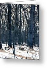 Maple Sirup Infrared N01 Greeting Card