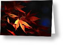 Maple Tree Leaves I Greeting Card