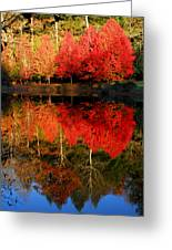 Maple Tree Mirror Greeting Card