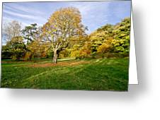 Maple Tree On The Slope. Greeting Card