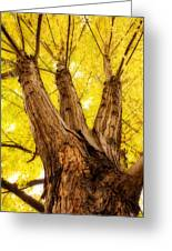 Maple Tree Portrait 2 Greeting Card