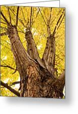 Maple Tree Portrait Greeting Card