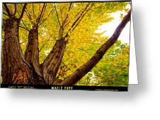 Maple Tree Poster Greeting Card