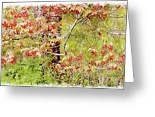 Maple Tree W C  Greeting Card