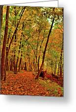 Maple Woods Trail 2 Greeting Card