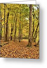 Maple Woods Trail Greeting Card