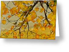 Maples In Autumn Greeting Card by Carolyn Doe