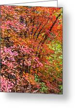 Maples In Pink Greeting Card