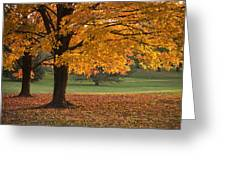Maples Trees In Fall Greeting Card