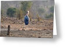 Marabou Stork Of Botswana Africa Greeting Card