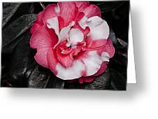 Marble Camellia Greeting Card