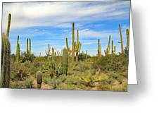 March Flowers And Cactus Greeting Card