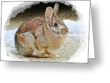 March Rabbit With Vignette Greeting Card